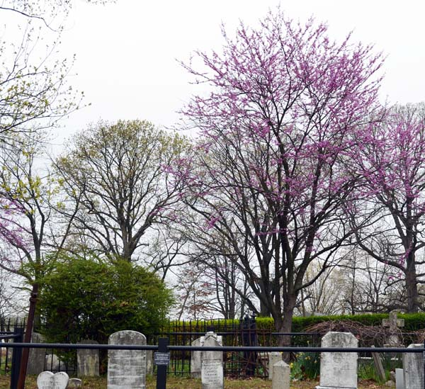 Pretty trees over Old Trinity Cemetery in Eldersburg, Maryland